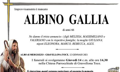 albino GALLIA