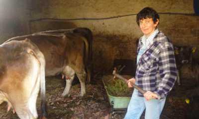 coragios stalla mucche