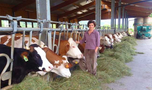 marina della piazza stalla mucche